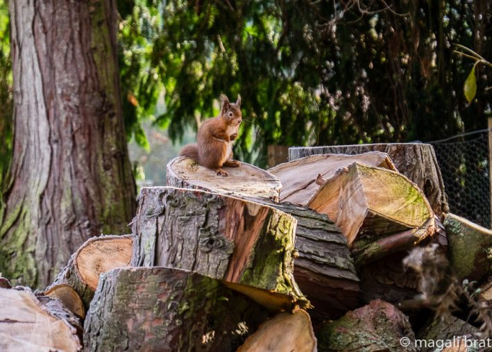 ecureuils_5